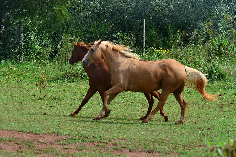 Horse Photograph - Two Horses In Unison  - 7221d by Paul Lyndon Phillips