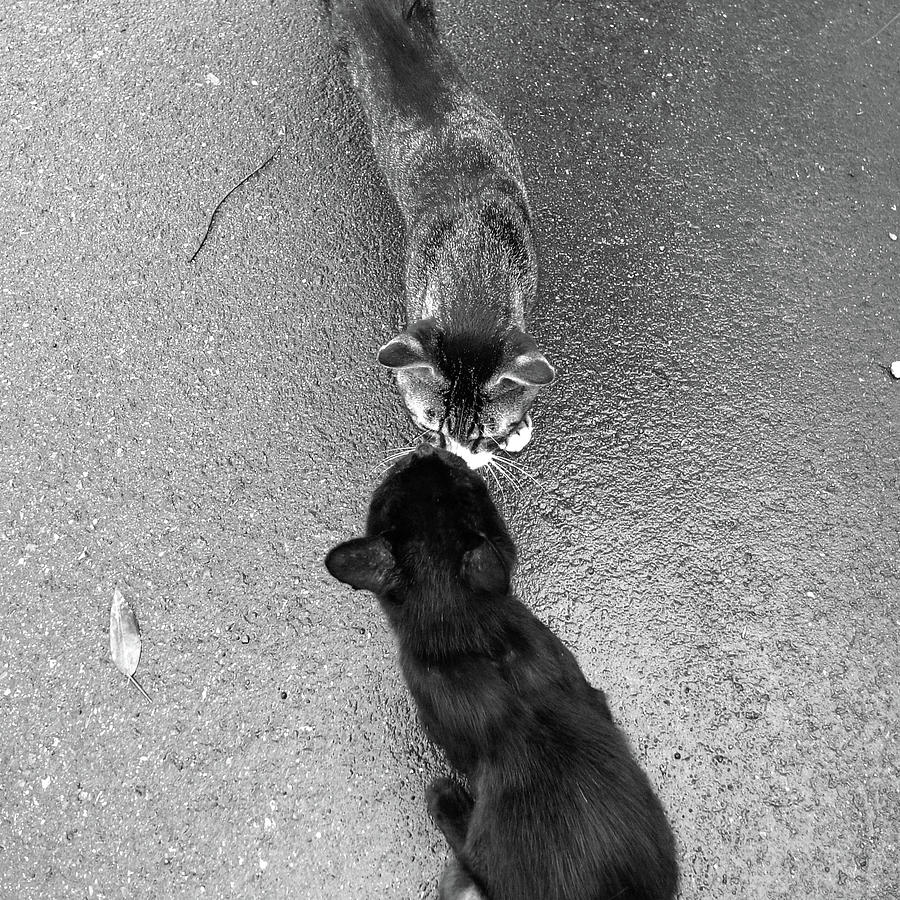 Square Photograph - Two Kittens Which Kiss by photographer, loves art, lives in Kyoto