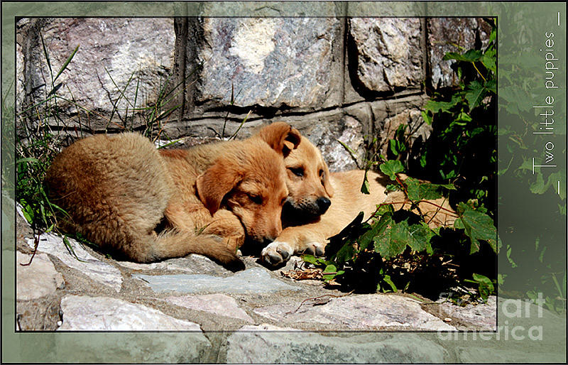 Puppies Photograph - Two Little Puppies by Melania Sherdenkovska