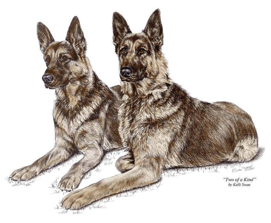 German Drawing - Two Of A Kind - German Shepherd Dogs Print Color Tinted by Kelli Swan