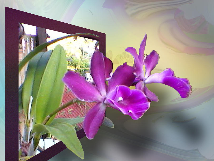 Orchid Digital Art - Two Orchids by Ginny Schmidt