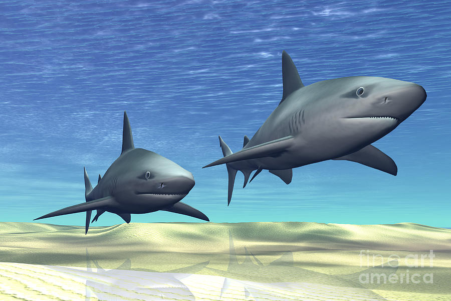 Sea Digital Art - Two Sharks On Patrol Over A Sandy Reef by Corey Ford