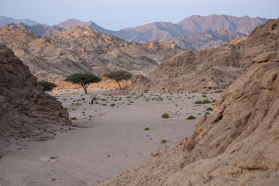Sinai Photograph - Two Trees In The Desert by Frits Selier