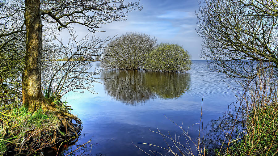 Lake Digital Art - Two Watery Trees  by Kim Shatwell-Irishphotographer