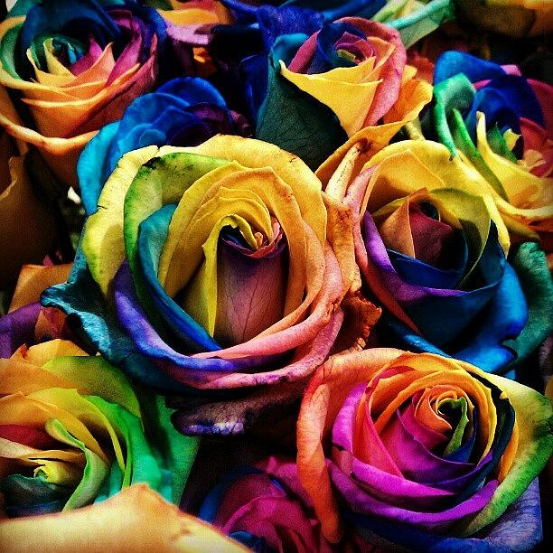 Rainbow Photograph - Tye-dye Roses. #multicolored #roses by Emma Holton