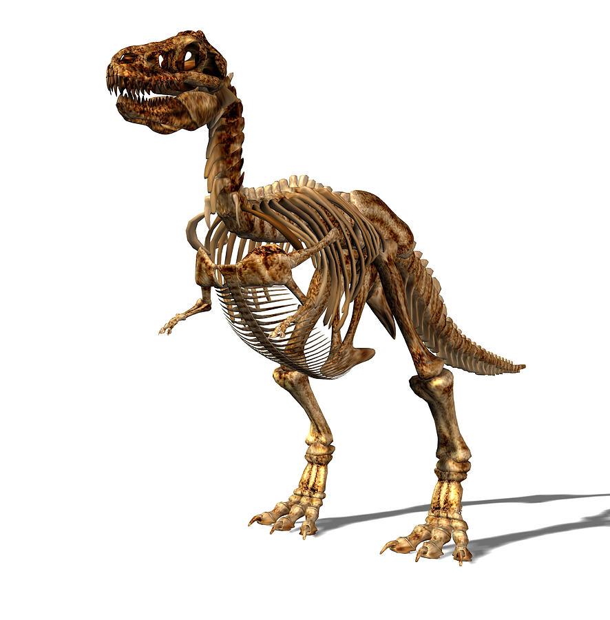 T. Rex Photograph - Tyrannosaurus Rex Dinosaur by Friedrich Saurer