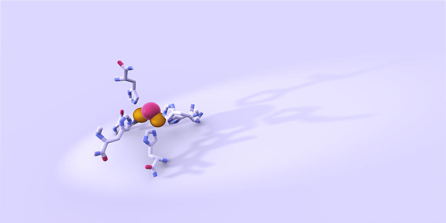 Tyrosinase Photograph - Tyrosinase Molecule by Phantatomix
