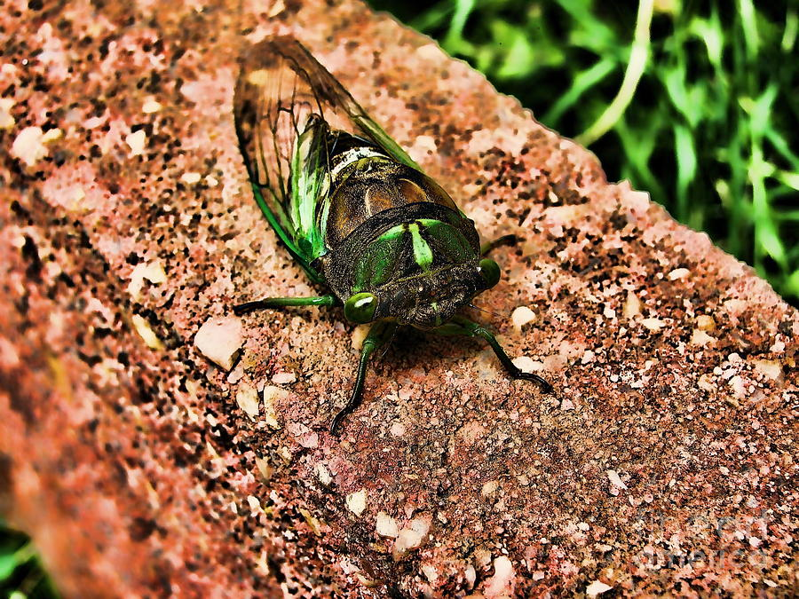 Bug Photograph - Ugh A Bug by Colleen Kammerer