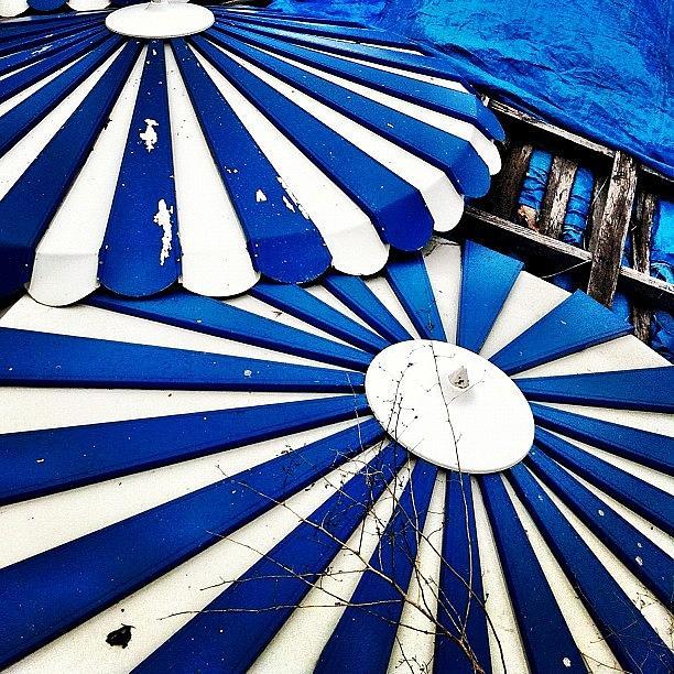 Umbrellas Photograph - Umbrellas by Julie Gebhardt