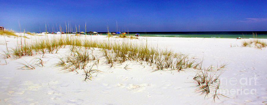 Panorama Photograph - Umbrellas On The Beach by Judi Bagwell