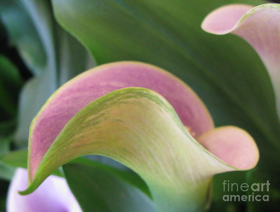 Flower Photograph - Undeniable by Tina Marie