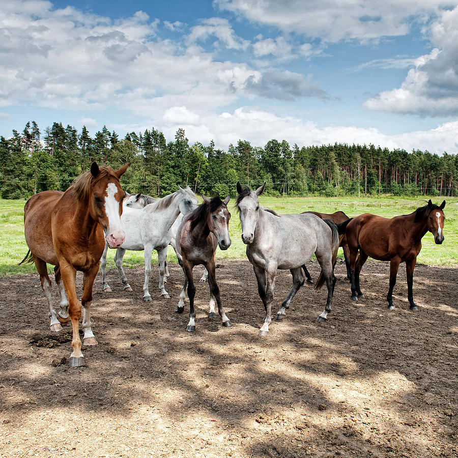 Equine Photograph - Under The Blue Sky by Marta Holka