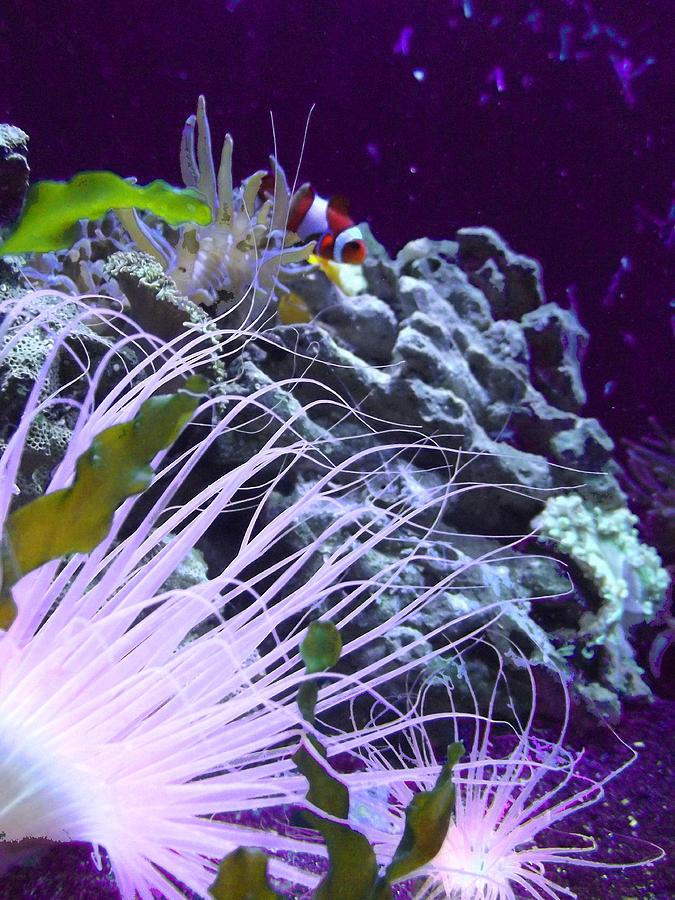 Underwater Photograph - Undersea World by Robin Hewitt