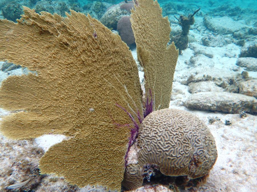 Underwater Photograph - Underwater Angel by Paulette Ingersoll