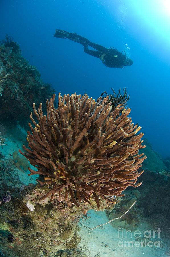 Invertebrate Photograph - Unidentified Species Of Sponge by Steve Jones