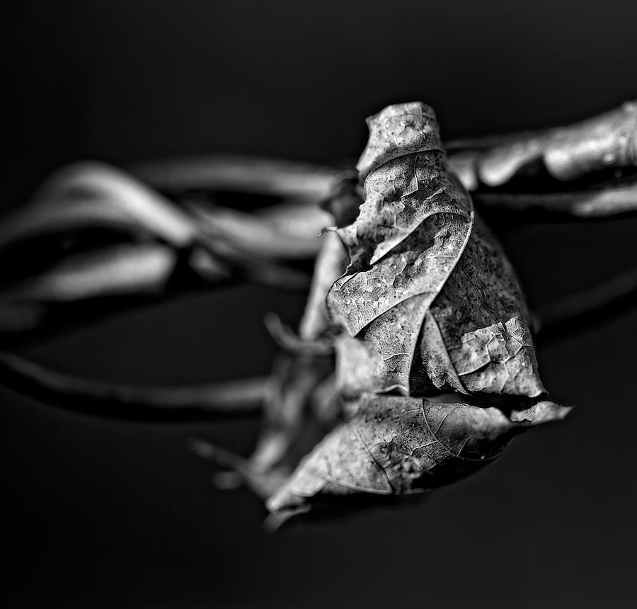 Leaf Photograph - Untitled by David Wynia