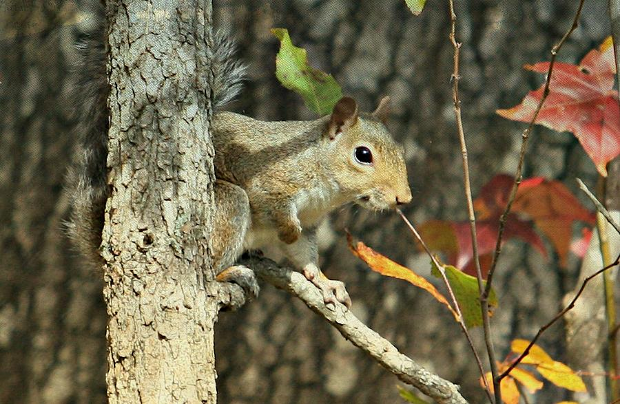 Animals Photograph - Up A Tree by Debbie Sikes