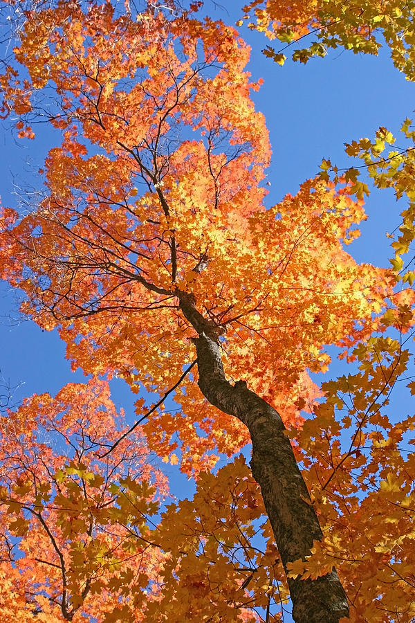 Autumn Landscape Photograph - Up And Up by Sharon I Williams