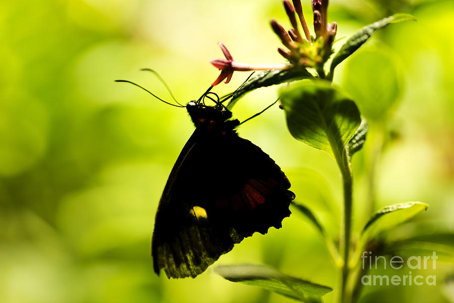 Butterfly Photograph - Upside Down by Leslie Leda