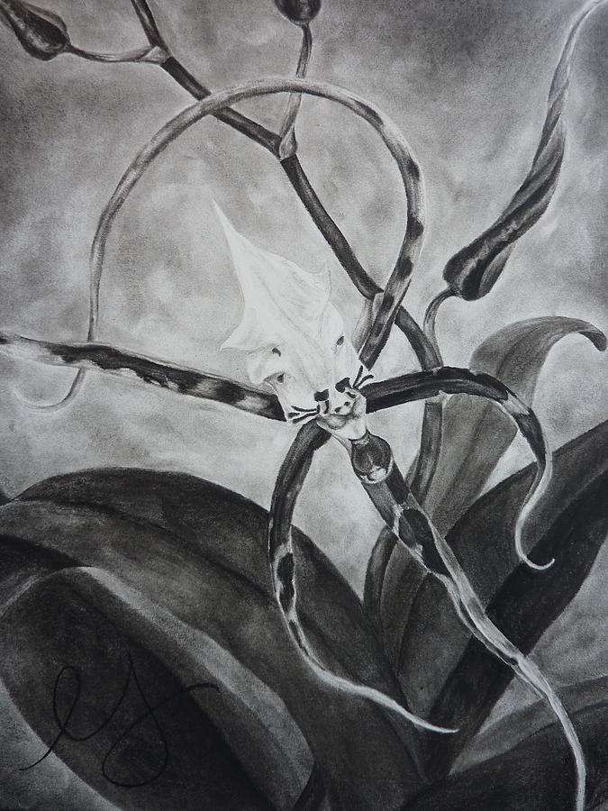 Flower Drawing - Upside-down Orchid by Estephy Sabin Figueroa
