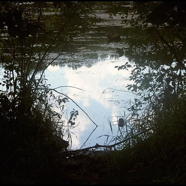 Upside Down Sky In Pond, Nature, Surreal Photograph by Kln Sink