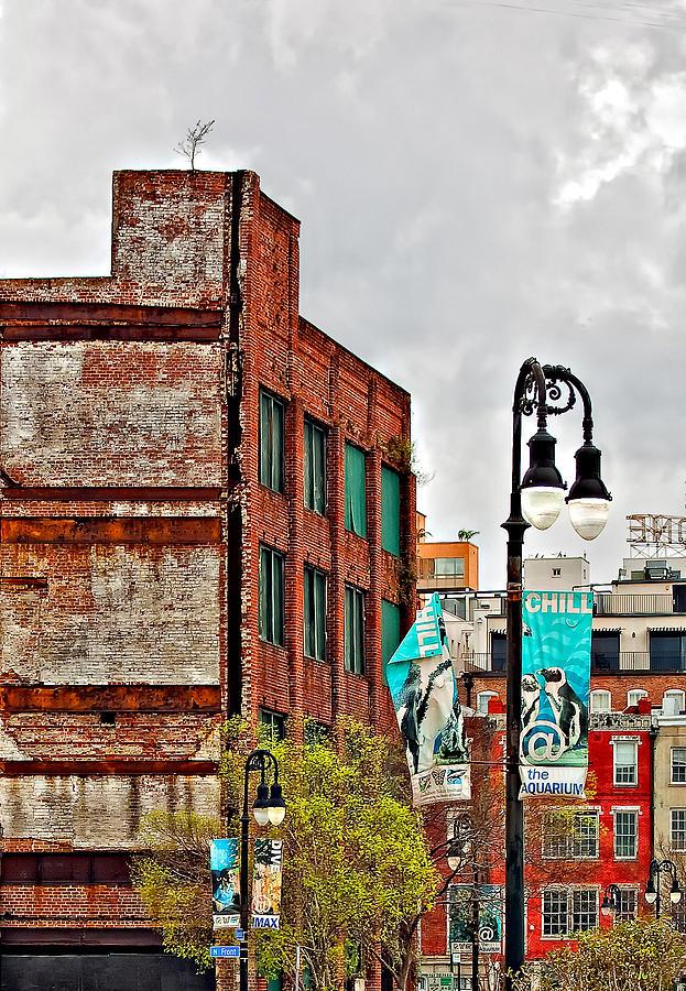 Urban Growing Pains Photograph
