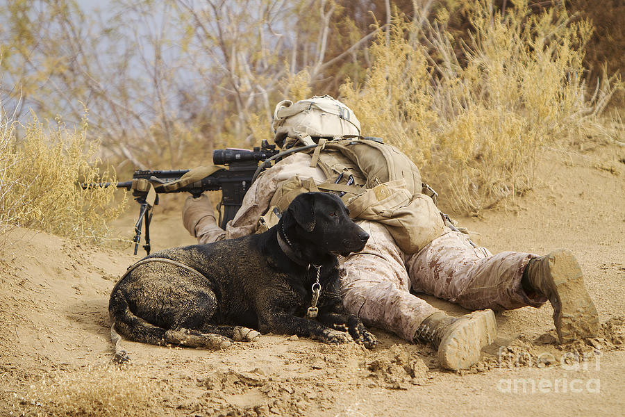 Afghanistan Photograph - U.s. Marine And A Military Working Dog by Stocktrek Images