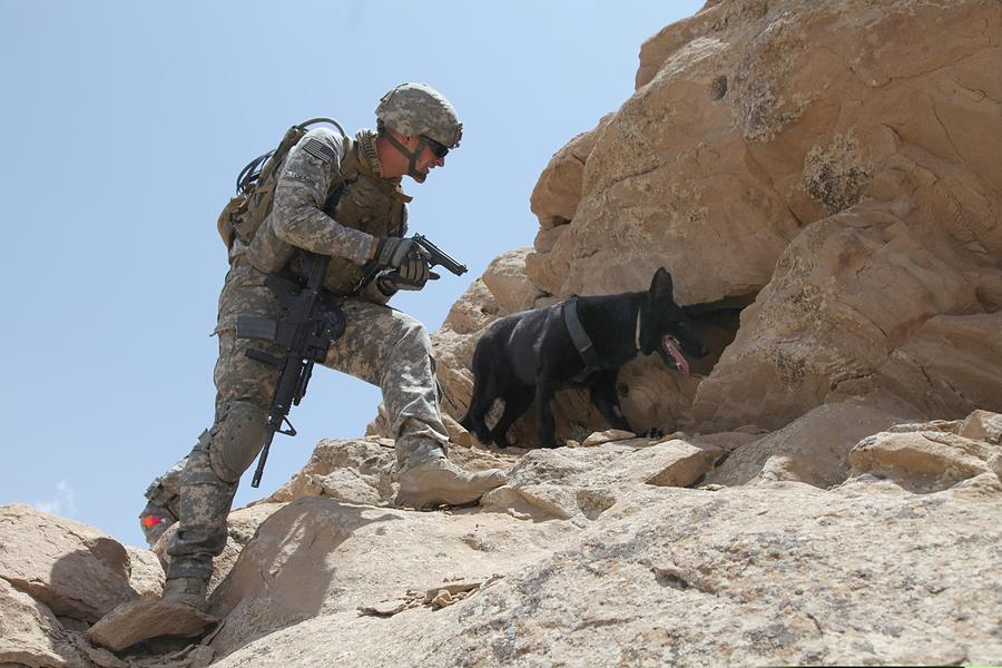 History Photograph - Us Soldier And Blek A Working Dog Clear by Everett