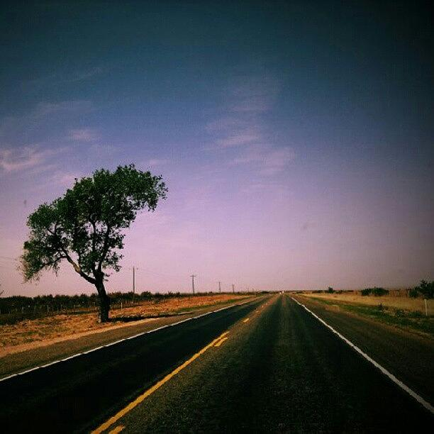 Awesome Photograph - #usa #america #road #tree #sky by Torbjorn Schei