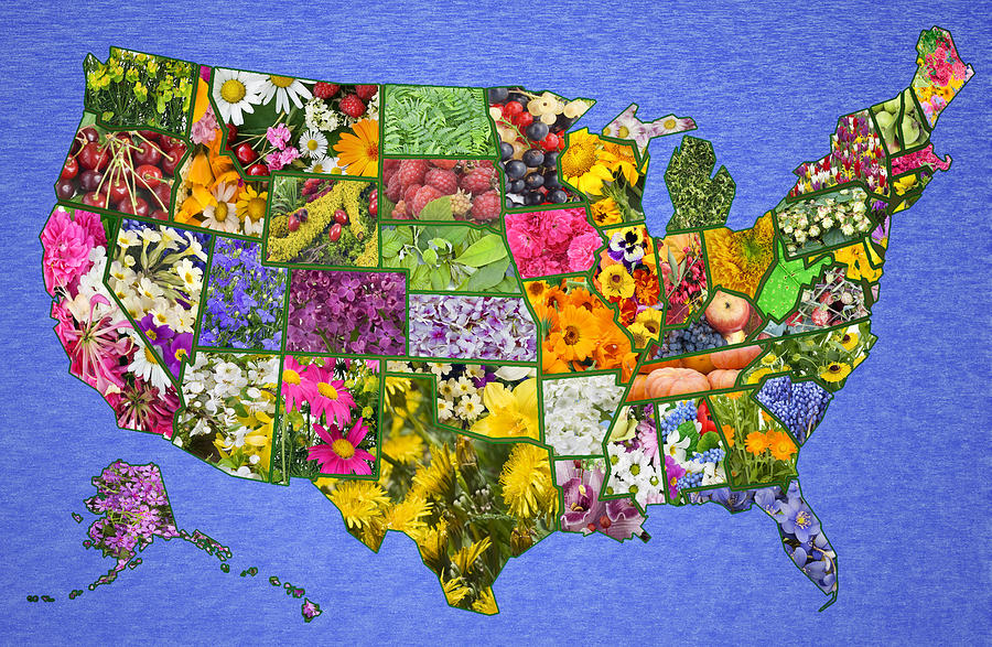 States Photograph Usa American Map From Flowers By Aleksandr Volkov