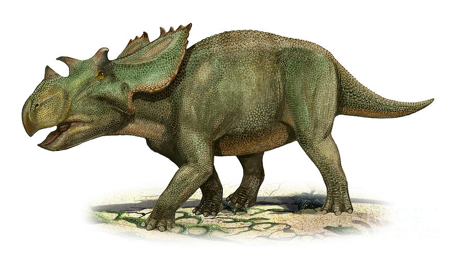 Horizontal Digital Art - Utahceratops Gettyi, A Prehistoric Era by Sergey Krasovskiy