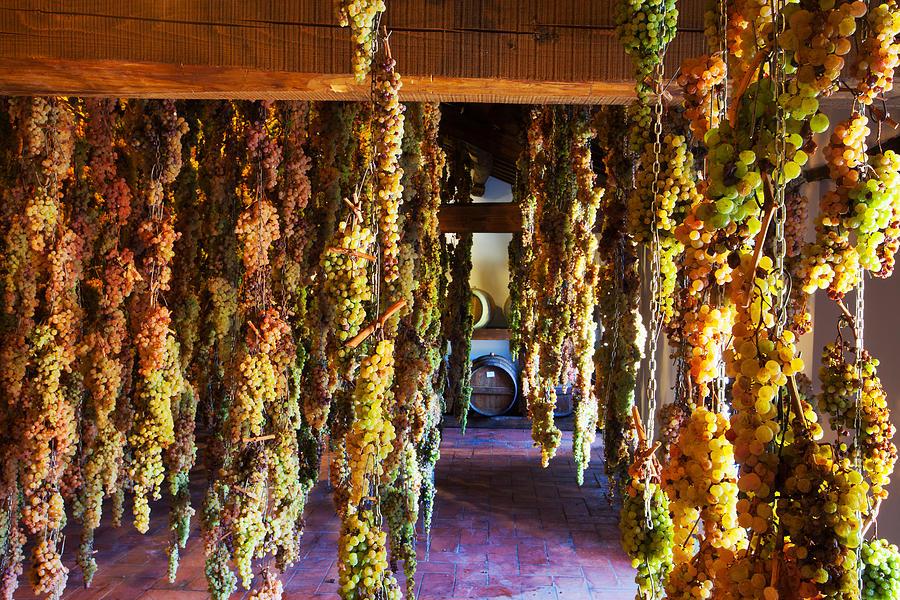 Grapes Photograph - Uva-italy by John Galbo
