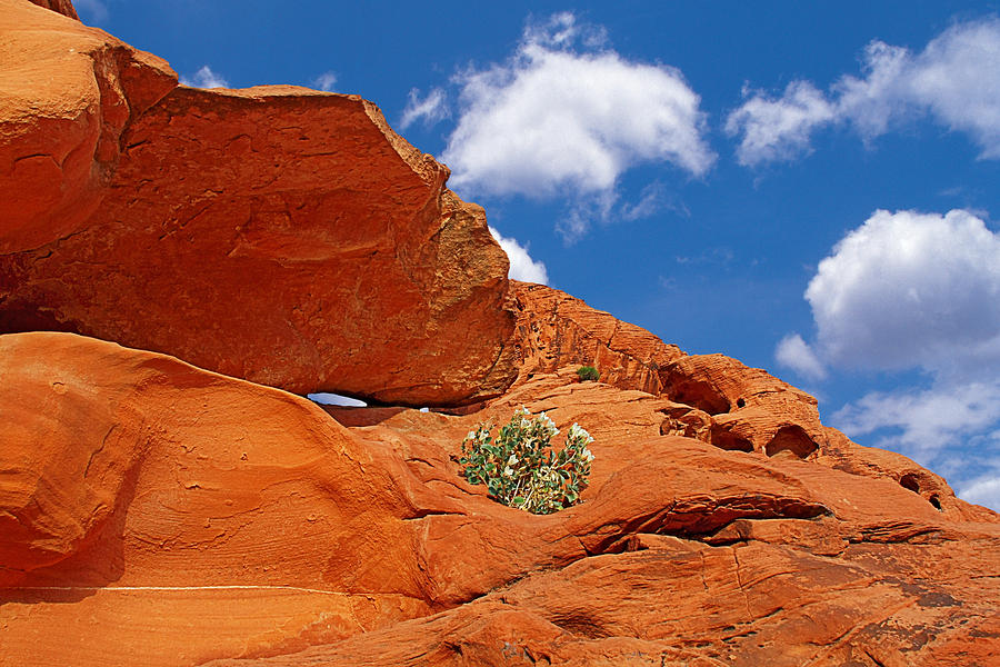 Valley Of Fire - Adventure In Color And Beauty Photograph
