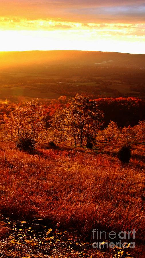 Gold Photograph - Valley Of Gold by Steven Lebron Langston