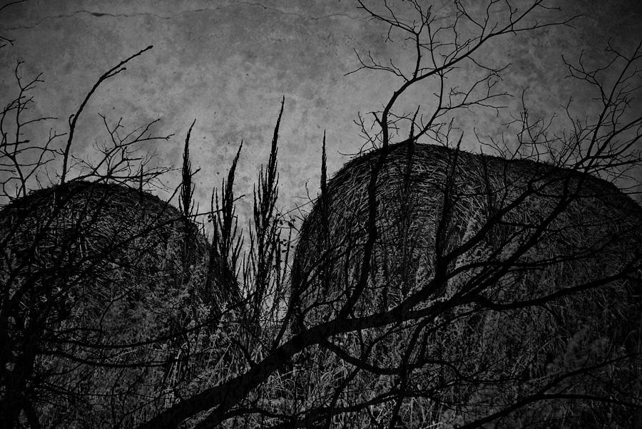 Window Framed Prints Framed Prints Photograph - Valley Of Sticks by Empty Wall