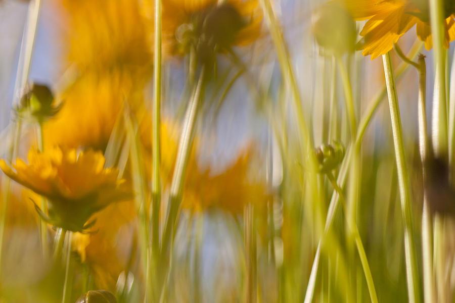 Van Gogh Remembered Photograph by Graham Hughes