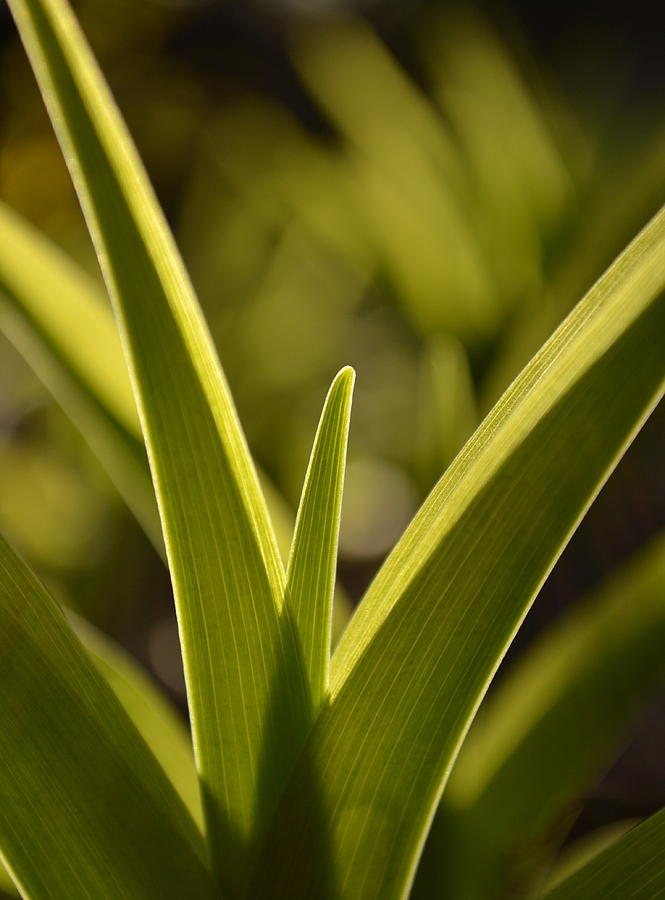 Green Photograph - Variegated Light 1 by JD Grimes
