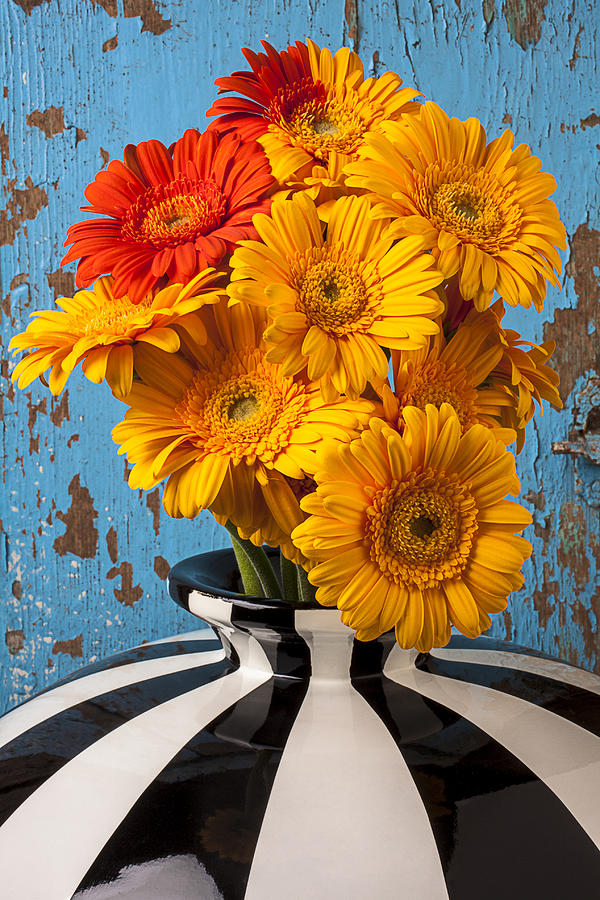 Daisy Photograph - Vase With Gerbera Daisies  by Garry Gay