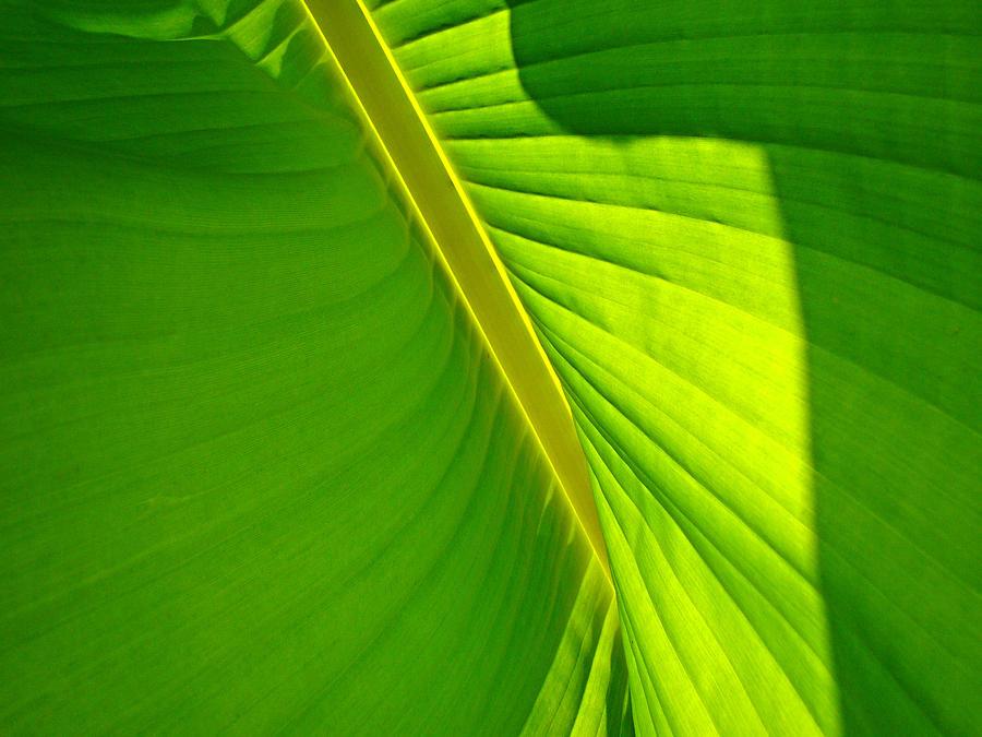 Green Photograph - Veins Of Green by Nick Kloepping