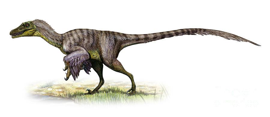 velociraptor mongoliensis digital art by sergey krasovskiy