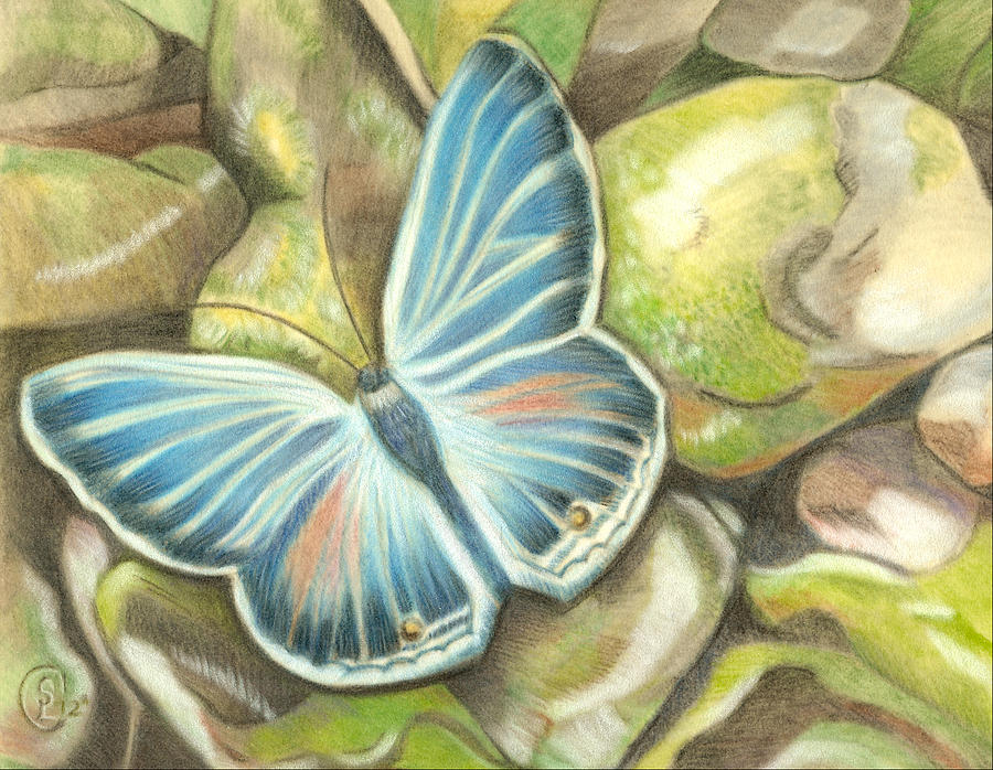 Butterfly Pastel - Velvet Blue by Stephanie L Carr