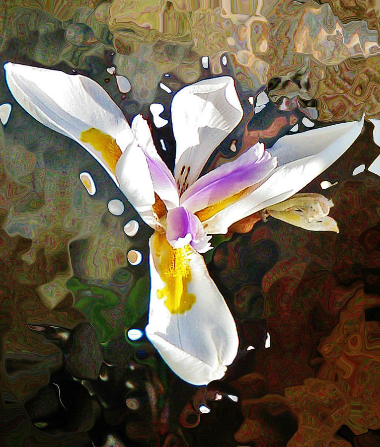 White Iris Photograph - Venice Iris by Daniele Smith