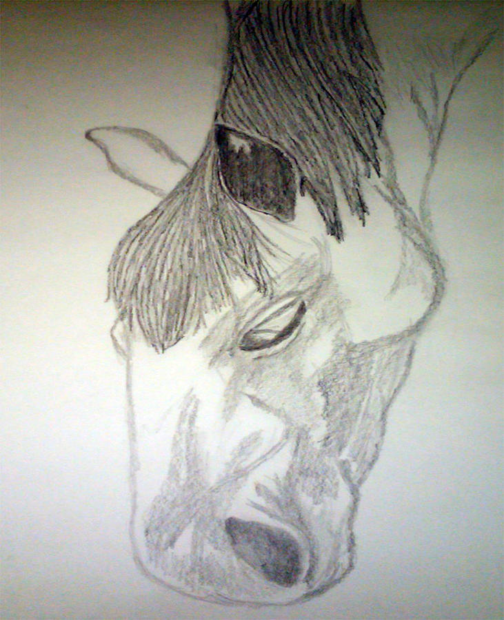 Horse Drawing - Venturing Out by Bethany Stanko