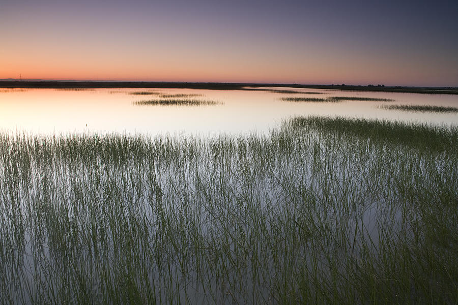 00465781 Photograph - Vernal Pool At Sunrise Jepson Prairie by Sebastian Kennerknecht