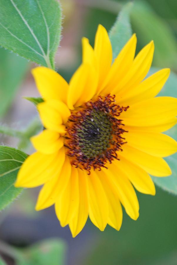 Yellow Photograph - Very Yellow by Michelle Cruz