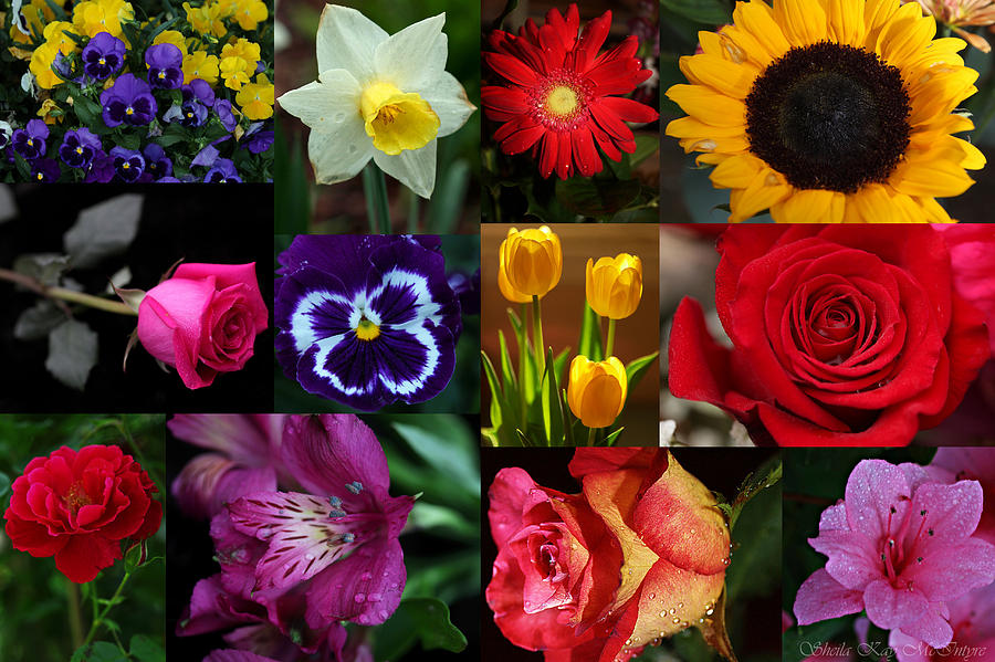 Vibrant Flower Collage Photograph By Sheila Kay Mcintyre