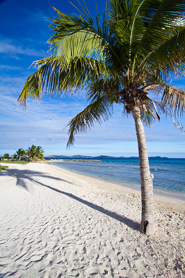 Vibrant Green Palm Trees On A White Sandy Beach In The