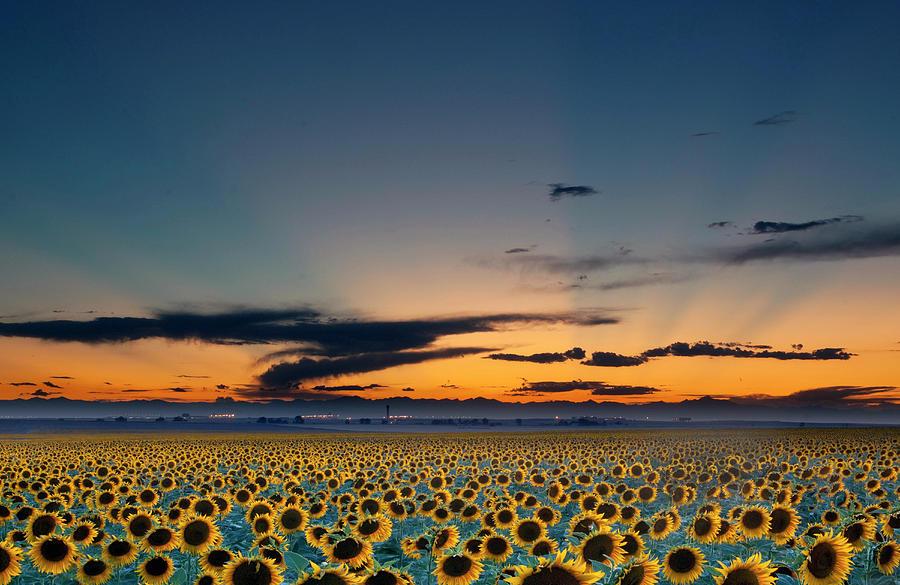 Horizontal Photograph - Vibrant Sunflower Field In Colorado by Victoria Chen