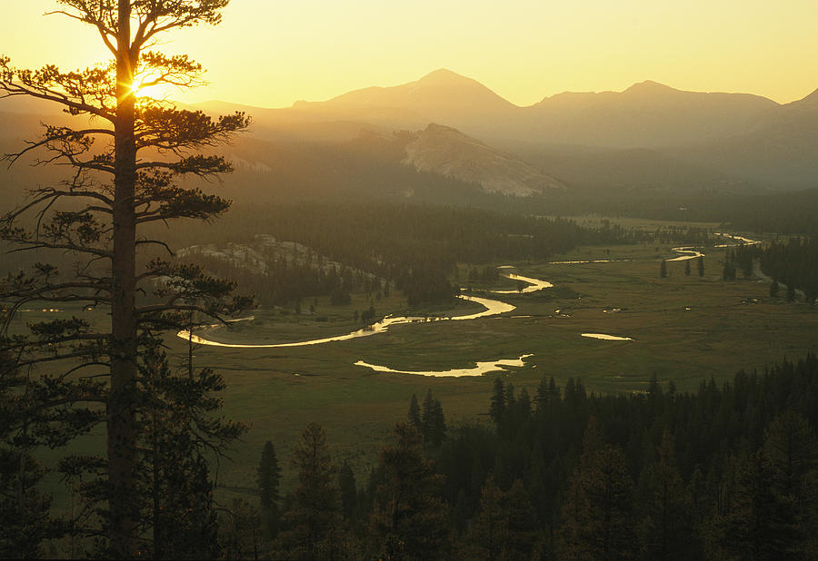 North America Photograph - View At Dawn Of The Tuolumne River by Phil Schermeister