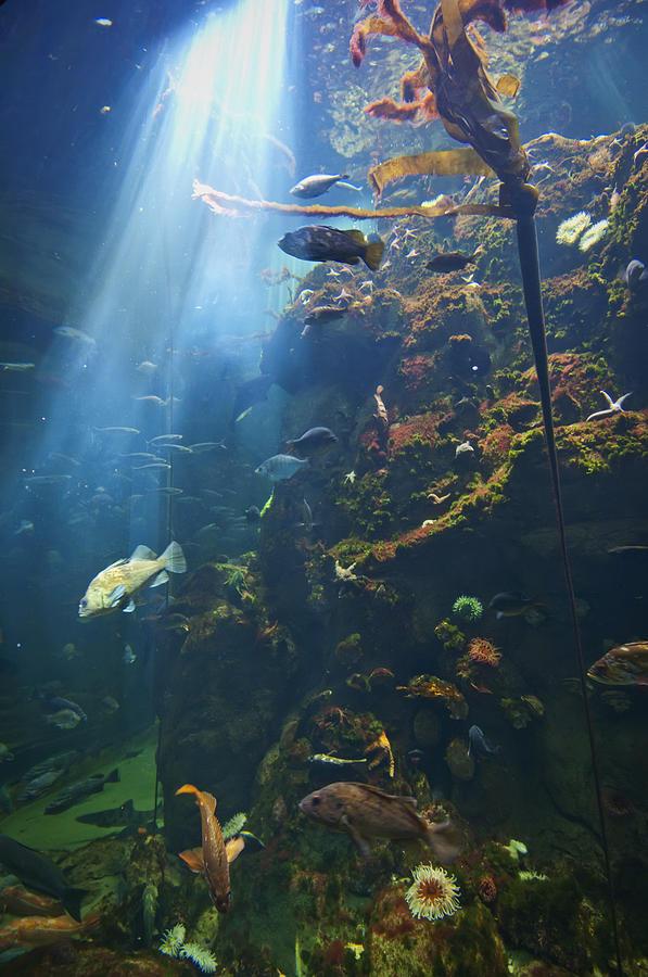 Aquarium Photograph - View Of Fish In An Aquarium In The San by Laura Ciapponi